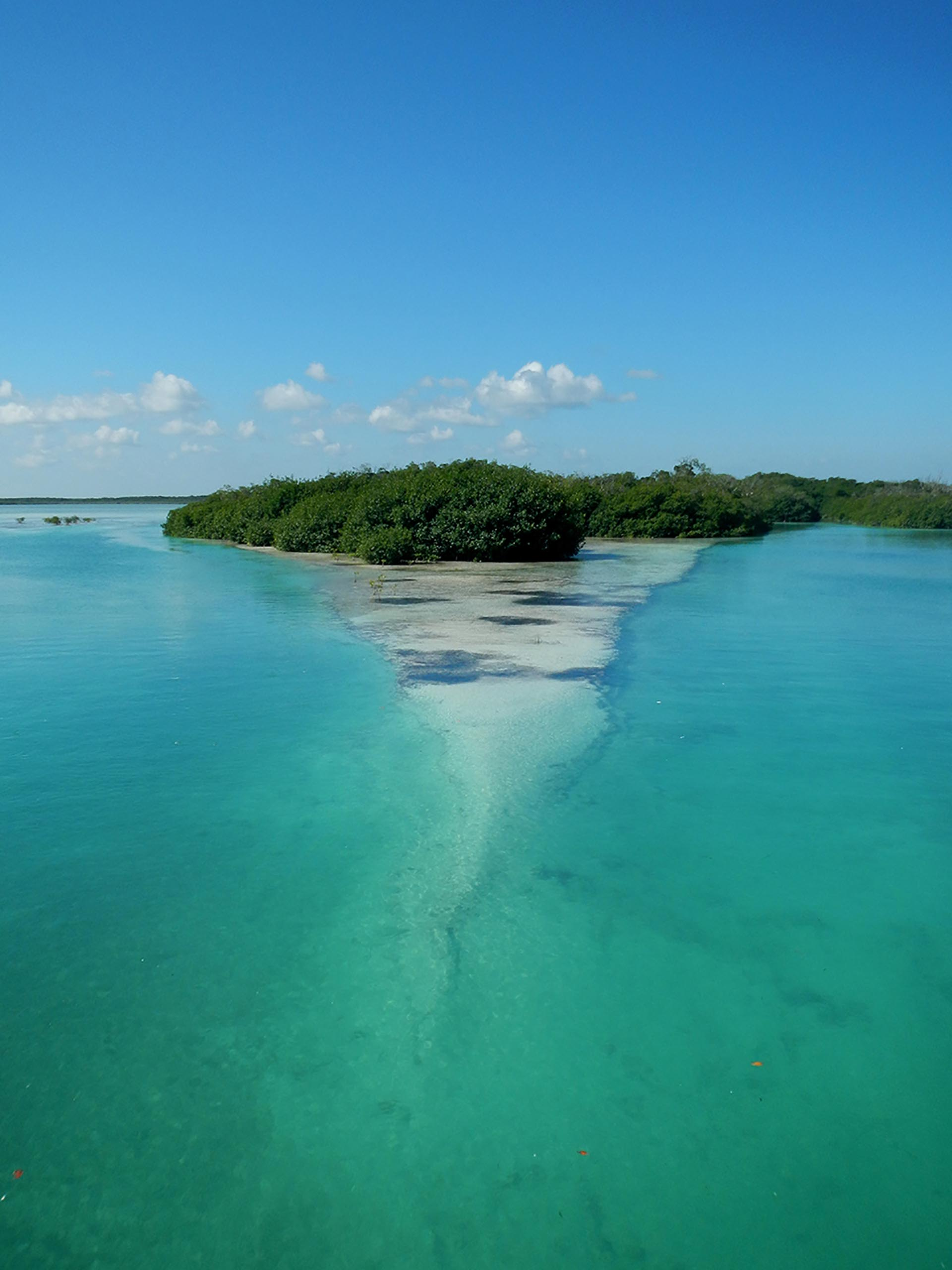 Mangrovie - Sian Ka'an