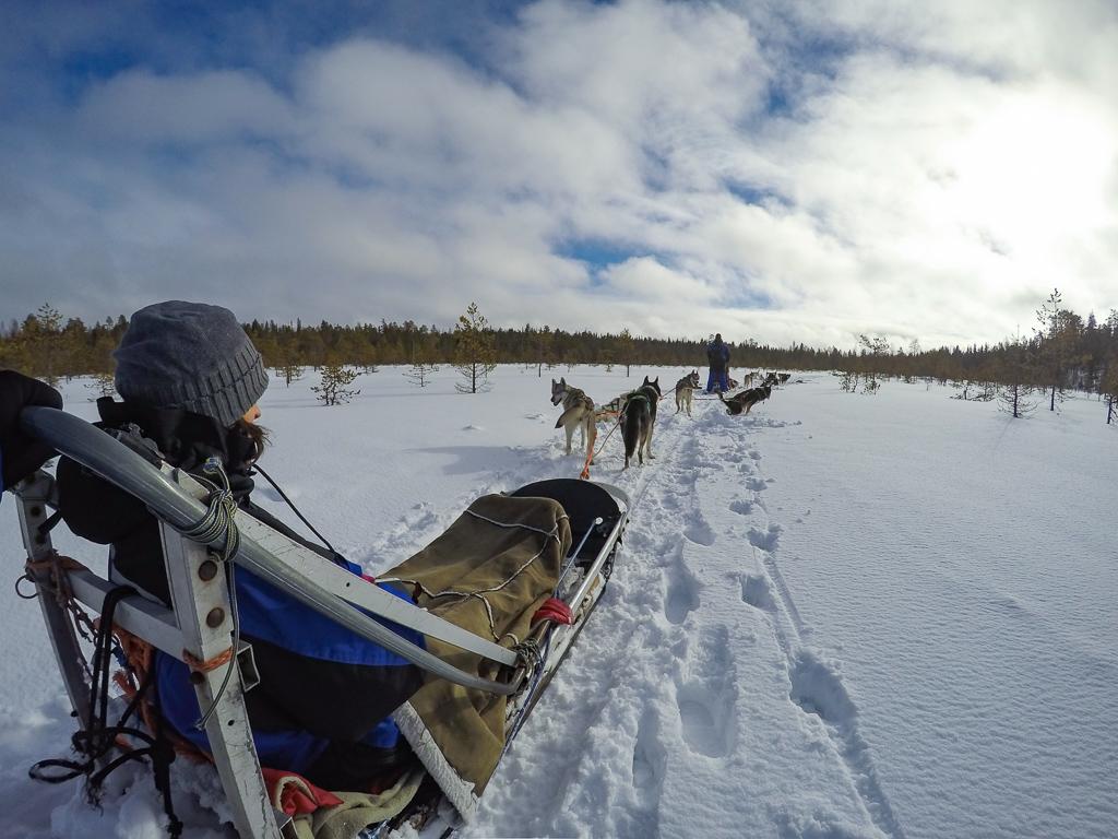 Safari con gli husky in Lapponia