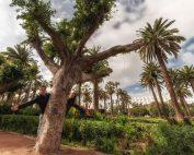 Parco delle Lega Araba