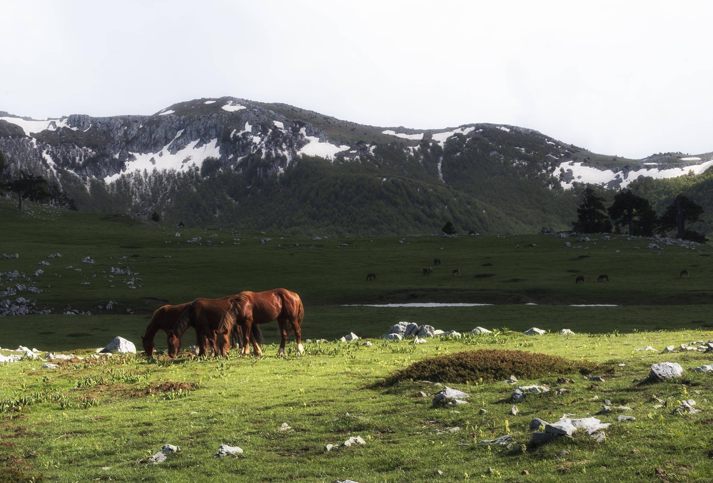 Cavalli allo stato brado sui Piani del Pollino