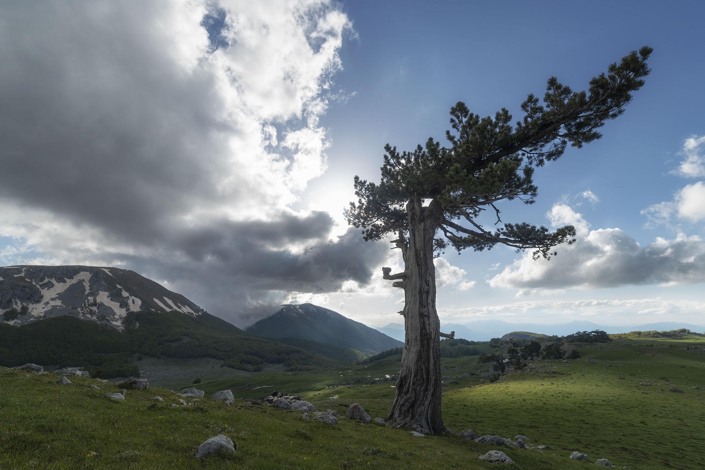 Turismo esperienziale in Calabria: ammirare i pini loricati sui Piani del Pollino