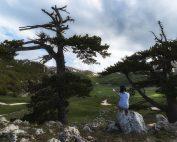 Persa nella bellezza dei pini loricati e del paesaggio dei Piani del Pollino