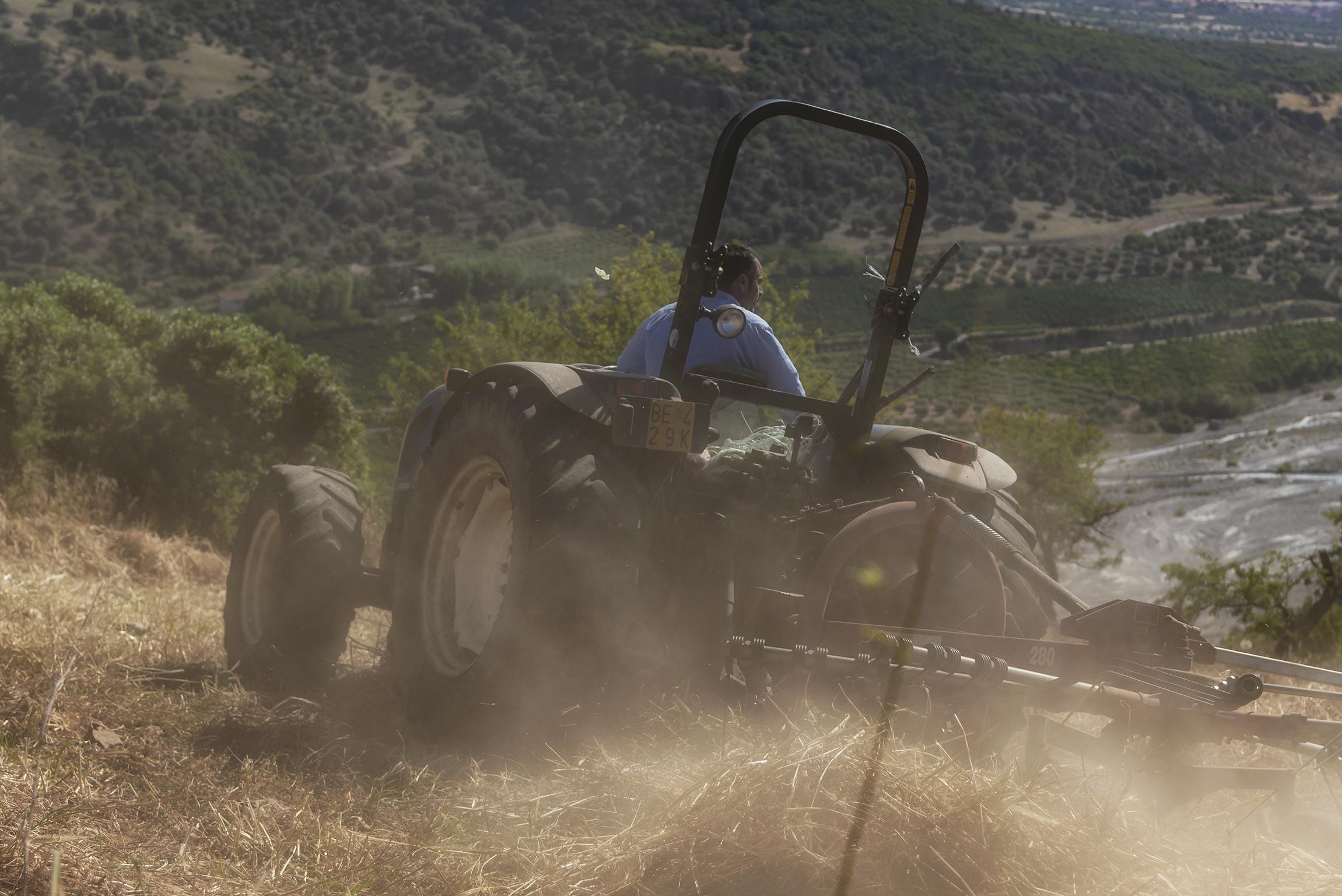 Antonio al lavoro nei campi