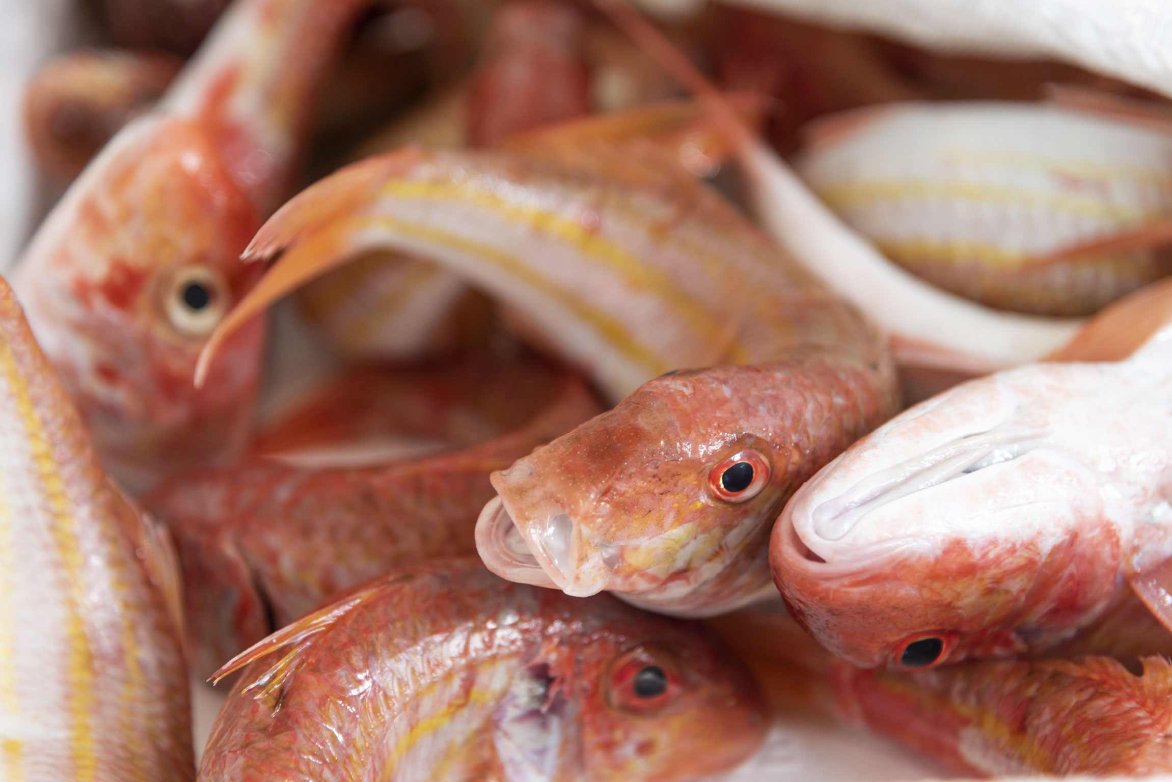 Pesce venduto durante l'asta