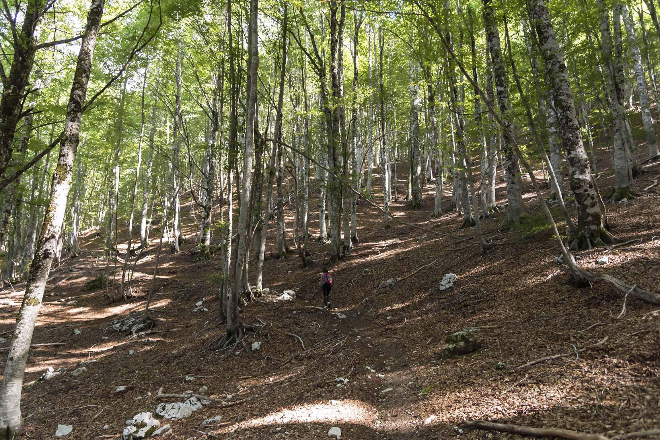Faggeta lungo il sentiero F2 della Val Fondillo
