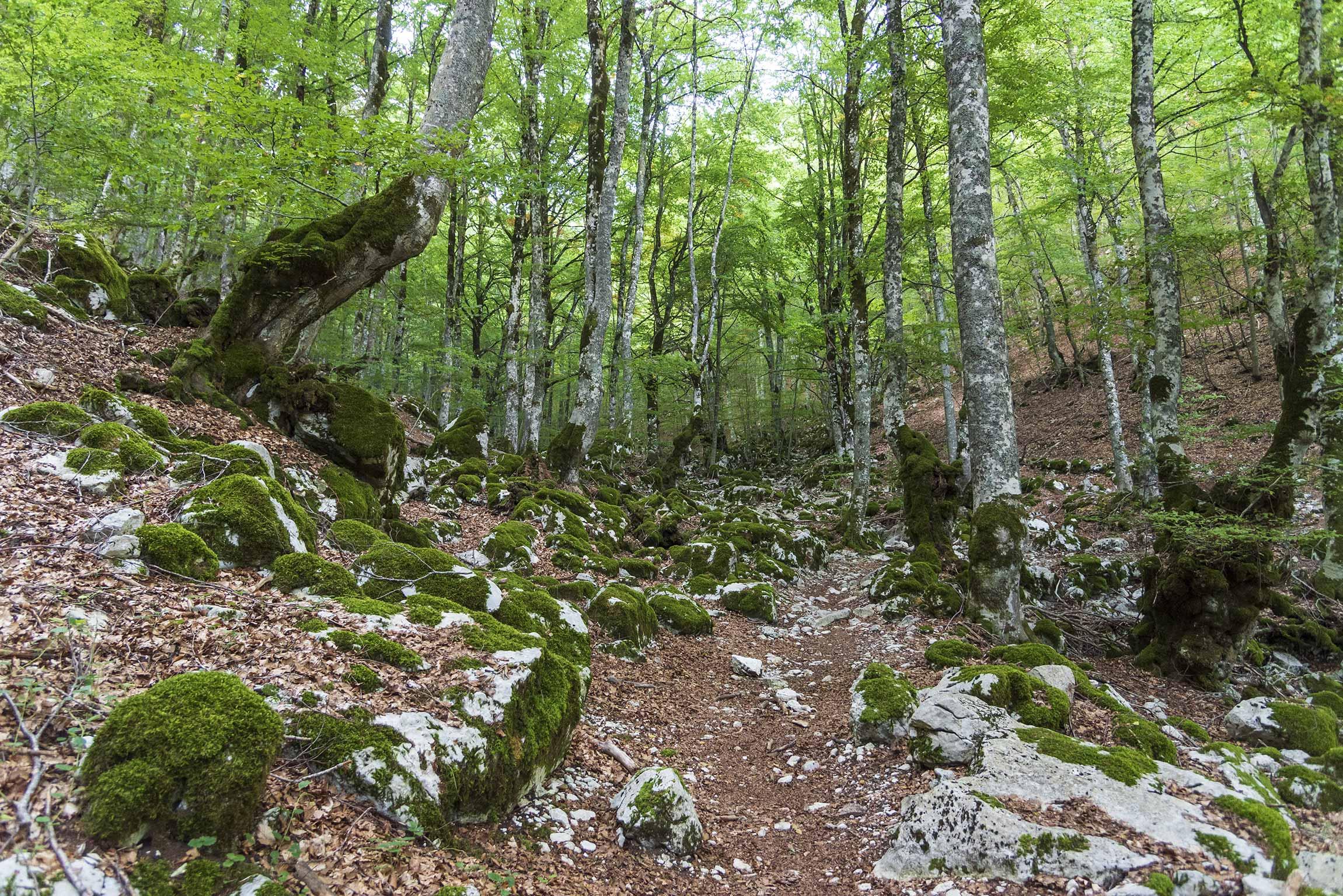 Faggeta della Valle dell'Inferno, Barrea, Parco nazionale d'Abruzzo, Lazio e Molise