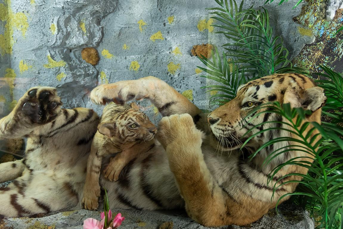 Museo Zoologico presso Villa Baciocchi di Capannoli