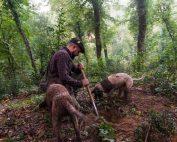 Weekend in Toscana: a caccia di tartufi in Valdera