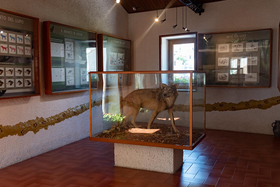 Interno del Museo del Lupo a Civitella Alfedena