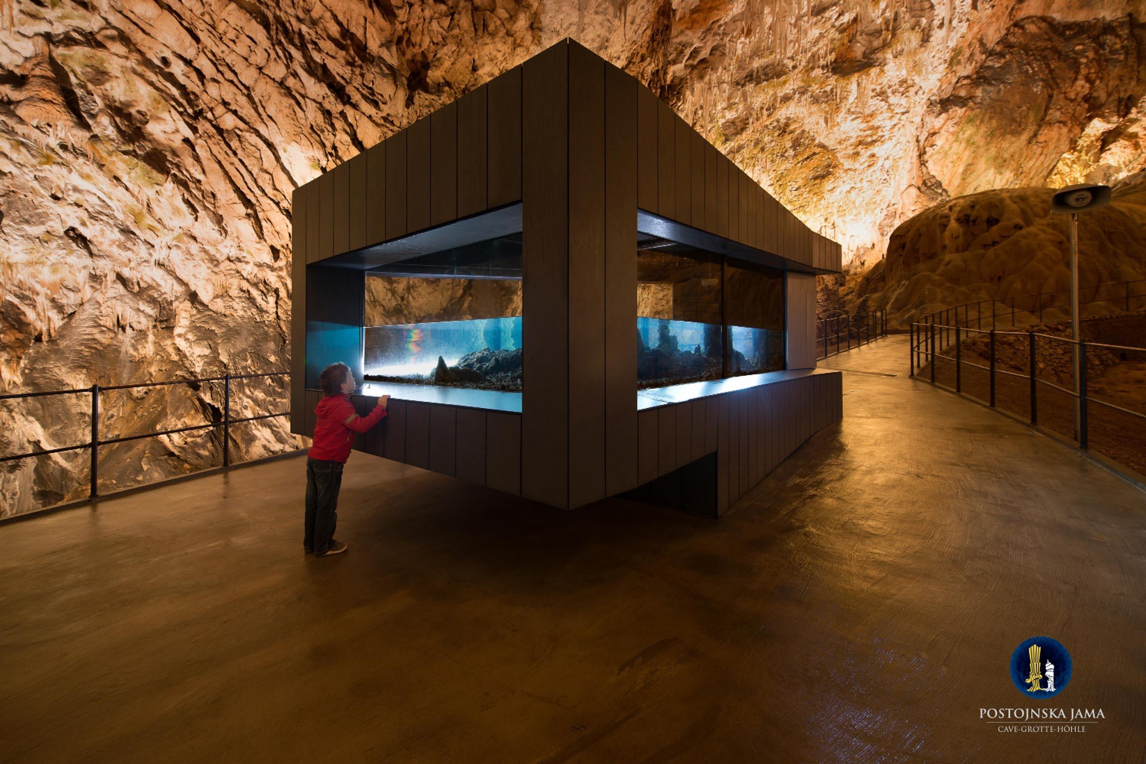 La Grotta del proteo - il protagonista delle Grotte di Postumia